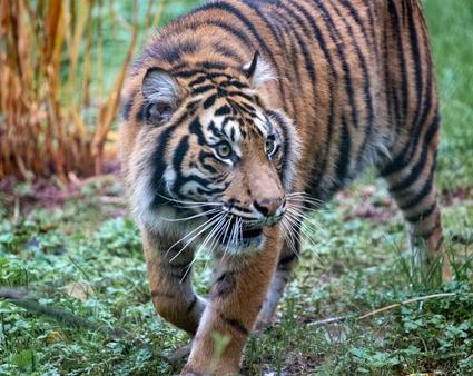 Paignton Zoo (coach only)
